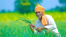 किसान भाइयों के लिए दिसम्बर माह के द्वितीय पखवाड़े हेतु महत्वपूर्ण सलाह ।