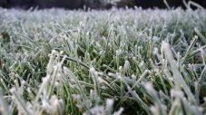 किसानों भाइयों सर्दियों में पाले के प्रकोप से अपनी फसलों को कैसे बचाये ?